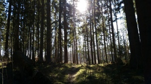 Walks in the forest - A very Swedish thing to do