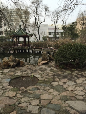 Sanctuary at Tongji for students, residents and campus cats