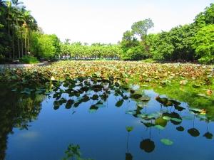 aLilly lake (2)