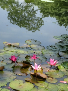 aWater lillies (2)