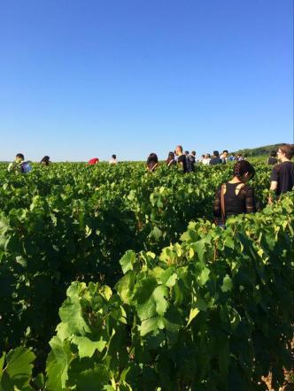 everyone in the vineyard