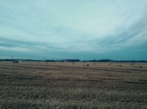 Wheat fields as far as the eye can see.