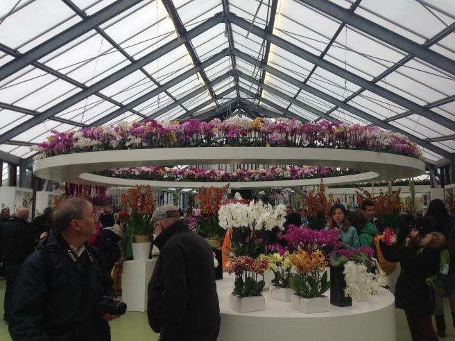 Blooming Netherlands