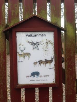 Reindeer park!