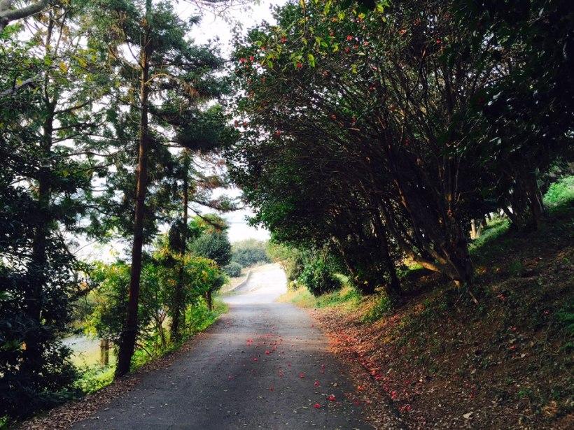 Mountain Road in Maeilbong Tongyeong