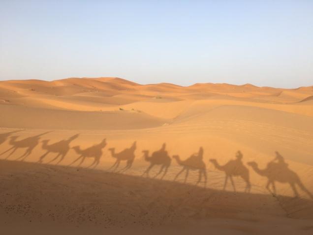 camels shadows morroco
